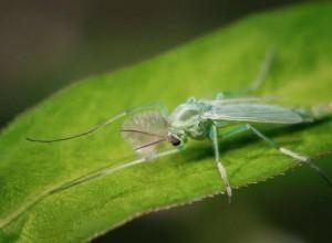 Полчища зеленых гудящих комаров замечены недалеко от Шахт