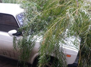 В Шахтах упавшая из-за сильного ветра ива раздавила ВАЗ