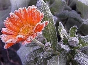 В Шахтах объявлено экстренное предупреждение о заморозках до -1 градуса мороза