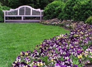 На цветы и уход за зелеными насаждениями в Александровском парке в Шахтах выделено полмиллиона рублей