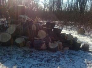 Неизвестные люди рубят хорошие деревья в посёлке ГРЭС в Шахтах