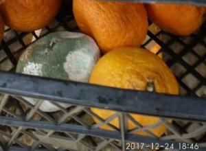 Гнилые мандарины в магазине «Магнит» шокировали шахтинцев