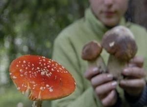 В Шахтах зарегистрировано отравление дикорастущими грибами