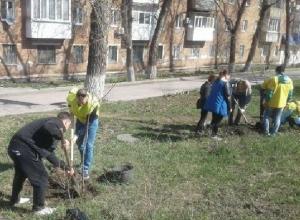 В День древонасаждений в Шахтах посадили деревья и привели в порядок улицы