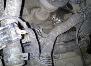Двух котят спасли из моторного отсека заведённого автомобиля в Шахтах