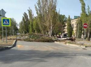 Рухнувшее под порывом ветра дерево перегородило улицу Ленина в Шахтах