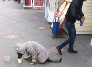 Собаку-попрошайку одели в курточку и снова вывели на улицу Шахт