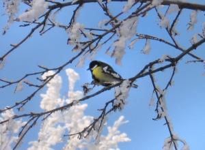 Яркое солнце и снегопад - Шахты встречает Крещенский Сочельник