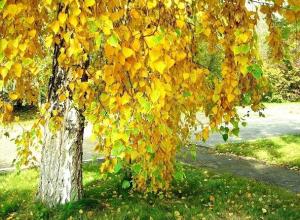 В воскресенье в Шахты придет астрономическая осень