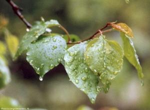В Шахты придут ливневые дожди и резкое похолодание