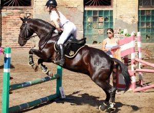 Полный комплект наград взяли спортсмены из Шахт в соревнованиях по конному спорту
