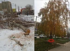 Незаконное уничтожение деревьев шахтинские власти не замечали почти месяц