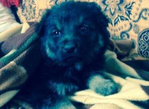 Чуть не замерзший щенок «Пацан» ищет в Шахтах новую семью