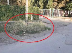 Открытый колодец спрятан в траве около входа в детский сад № 21 в Шахтах