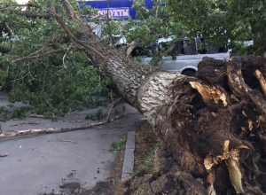 Громадное дерево в Шахтах рухнуло на проезжавший мимо автобус