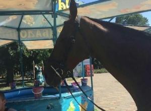 На печальную лошадь, стоящую на жаре, обратила внимание жительница Шахт