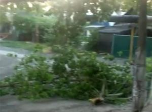 Ураган в Шахтах ломал ветки и обрывал провода
