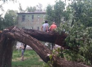 Коммунальщики Шахт игнорируют рухнувший на дом громадный тополь