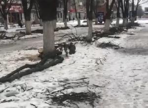 Спиленные на шахтинском «Арбате» ветки оставили лежать на тротуаре