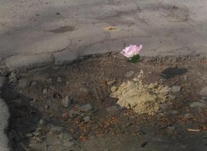 Украсили цветами ямы в Шахтах