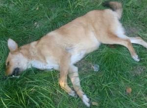 Посетитель тира в шахтинском парке вместо мишени расстрелял собаку