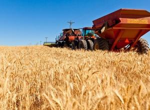Мумифицированное тело женщины в синем платье нашли в пшеничном поле