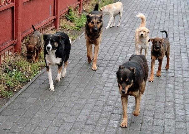 Шахтинцам предлагают делать заявки на отлов бездомных собак