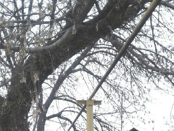 Чтобы убрали старое дерево жителям Шахт придется ждать несколько лет