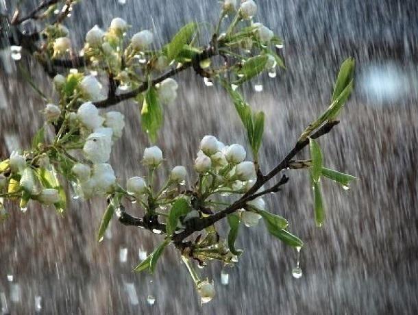 Резкое похолодание и первый весенний ливень ожидают Шахты в четверг