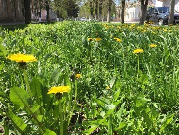 А погода в Шахтах на этой неделе - песня лета!