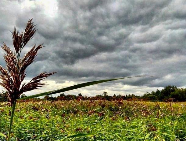 «Уж небо осенью дышало»: погода в Шахтах на выходные