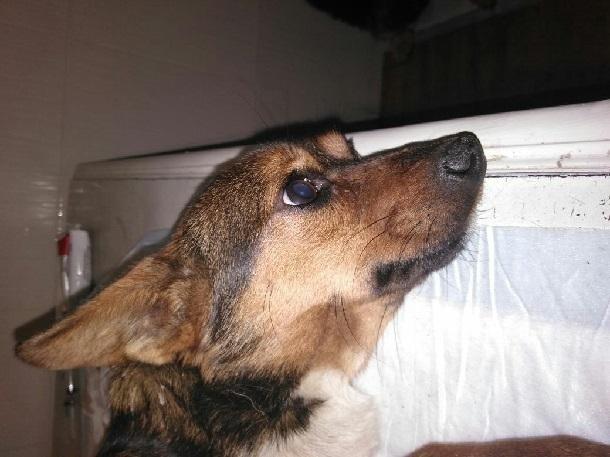 Переломы лап у собаки шахтинцы пытались лечить салфетками и картоном