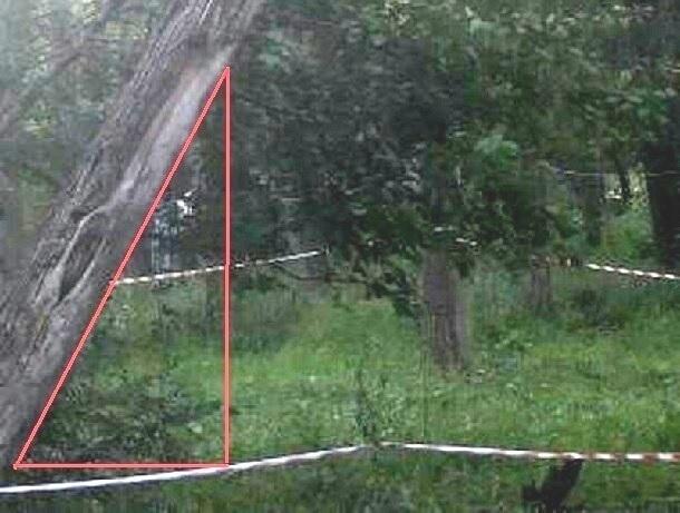 На проспекте Ленинского комсомола в Шахтах рухнувший ствол держится на линиях электропередач