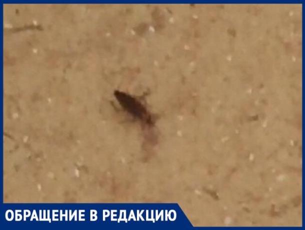 Тараканы хозяйничают в шахтинской больнице