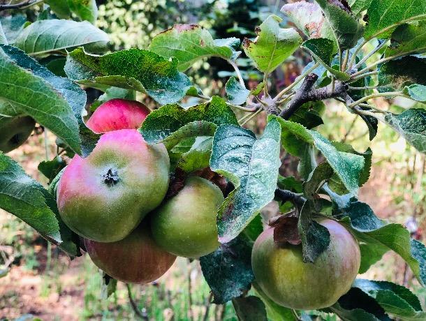Щедрая осень: в Шахты приедут фермеры со своими дарами