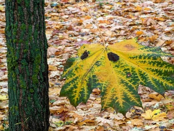 «Осень - ностальгии нотка»: погода в Шахтах