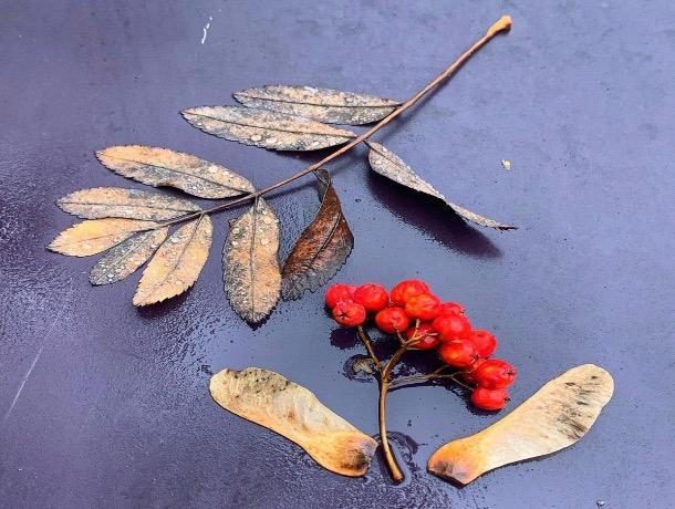 «Осень - вдуше человека»: погода в Шахтах