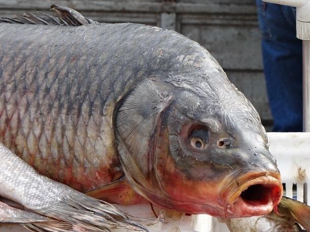 Продавец рыбы в Шахтах приговорен к реальному сроку за взятку в две тысячи рублей