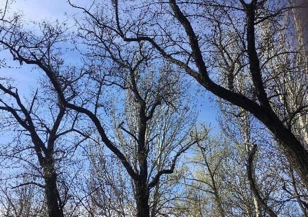 «Уж небо осенью дышало»: в Шахтах похолодает