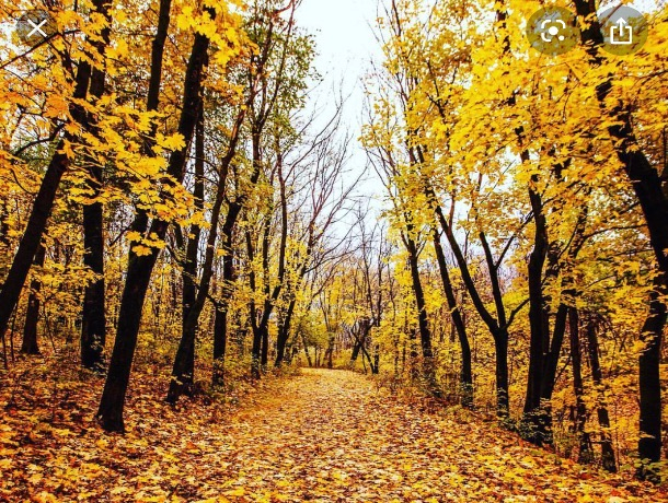 «И осени прозрачный воздух»: погода в Шахтах