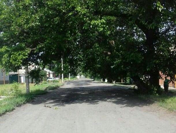 Наклонившееся дерево мешает проезду общественного транспорта в Шахтах