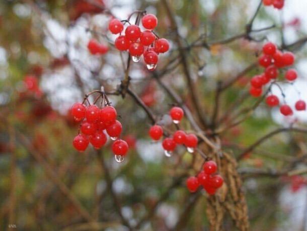 «Осень приоткрыла дверь для стужи»: погода в Шахтах