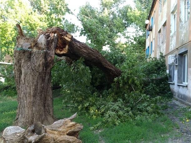 Огромное дерево ночью рухнуло на жилой дом  и выбила окна в ГРЭС в Шахтах