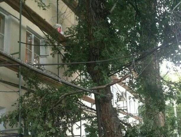 Аварийное дерево угрожает жителям на улице Садовая в Шахтах