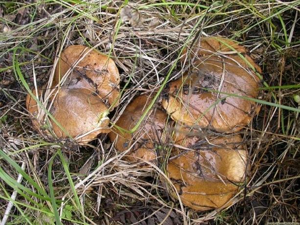 Где собирать, как выбирать и как хранить грибы рассказали жителям Шахт