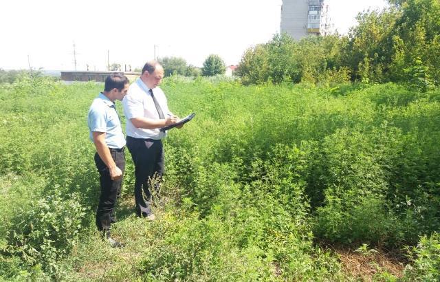 За нескошенную амброзию оштрафовали города Ростовской области, в их числе и Шахты