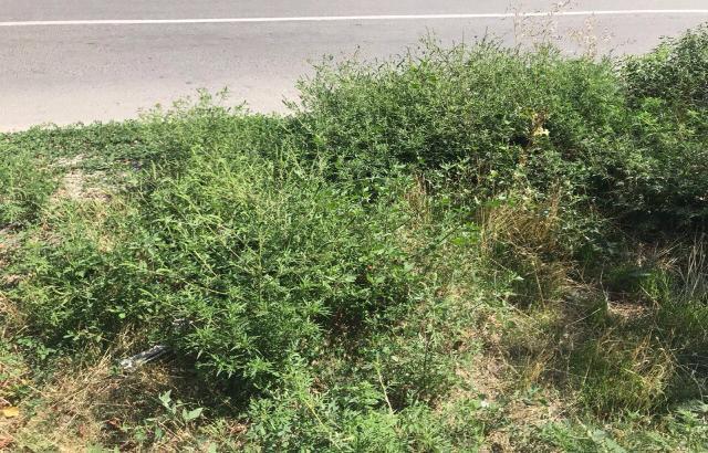 В Шахтах Административная инспекция региона снова выявила нарушения
