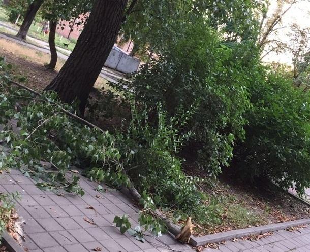 Огромная ветка с аварийного дерева обрушилась во дворе многоквартирного дома в центре Шахт