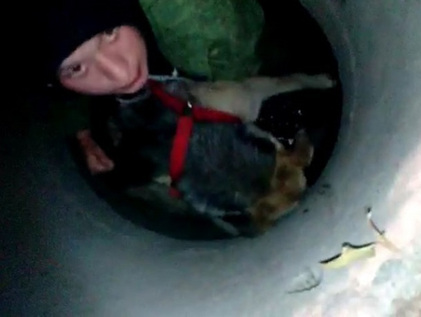 Перепуганную дворнягу вытащили шахтинские волонтеры из бетонного колодца