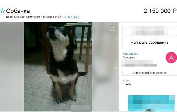 В Шахтах продают пожилую собаку более чем за два миллиона рублей